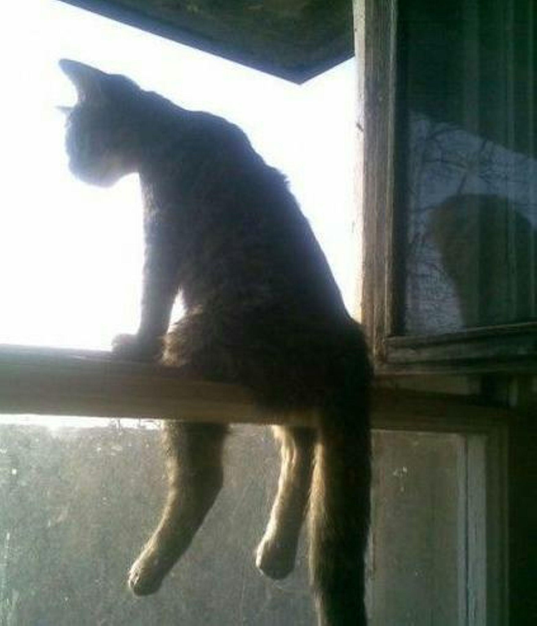 Три кошки сбежали в москве(!) из квартиры без балкона(!) за .