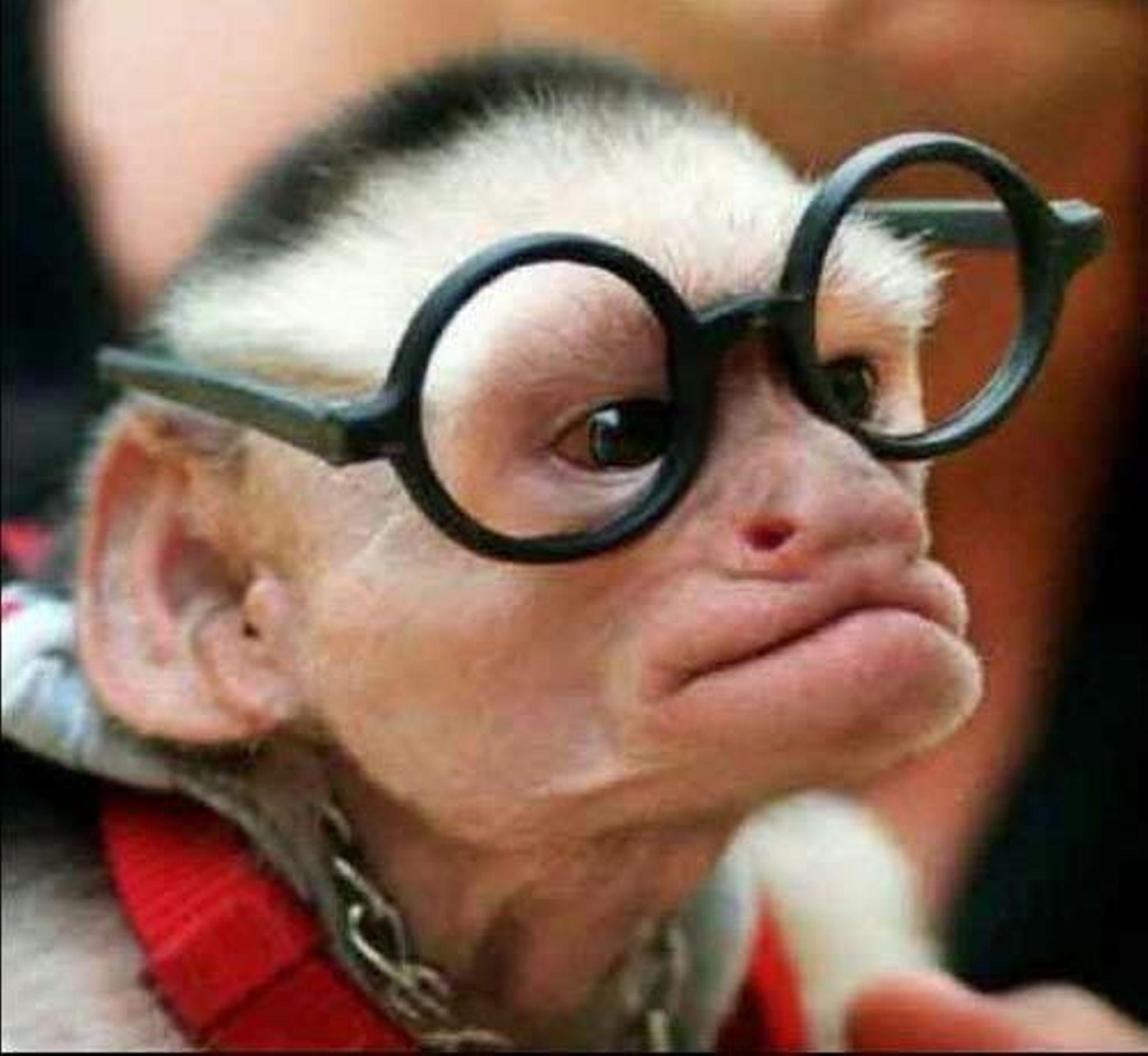 Фото офисных работников с приколом в роле обезьян 6
