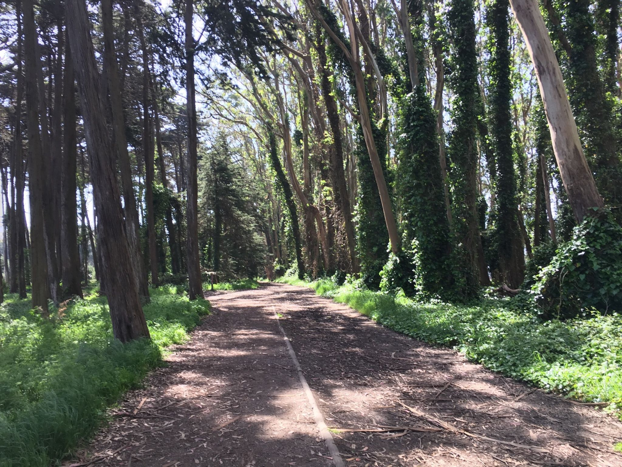 Woodlands in the Presidio
